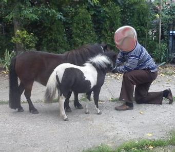konie miniaturki